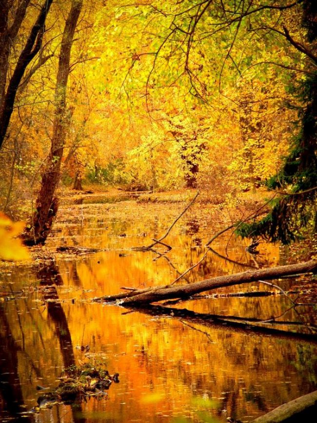 Sternzeichen Oktober: Zur Waage Zeit werden Blätter gelb, liegt verführerischer Duft in der Luft