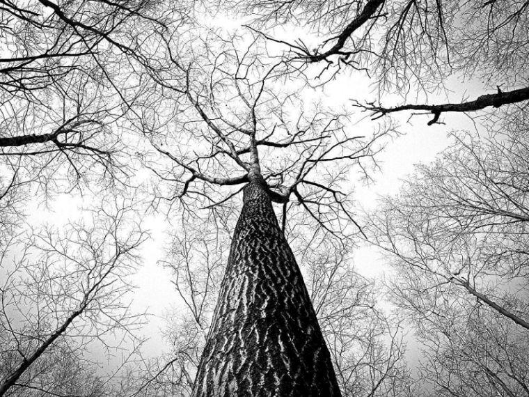 Januar Sternzeichen Steinbock kann so klar und strukturiert wie die Bäume in seinem Geburtsmonat sein.