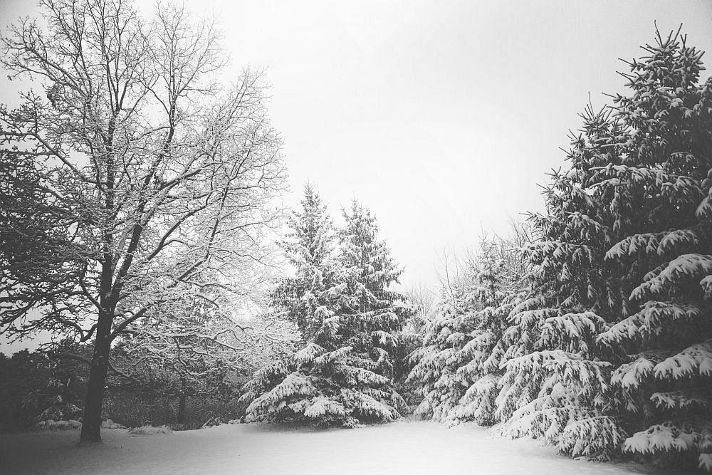 Januar Sternzeichen Steinbock empfindet die soziale Umgebung oft als ungemütlich, entsprechend der eiskalten Natur zu seiner Geburtszeit.