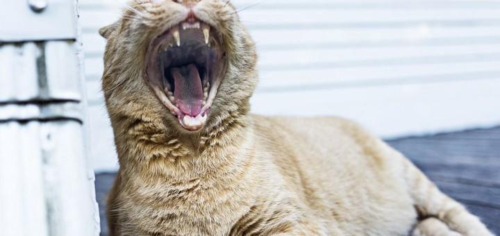 Einen Löwe Mann erobern - wie?
