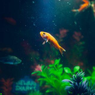 Fische Frau
