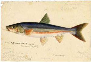Sternzeichen Fisch: Besondere Begabungen und Schwierigkeiten